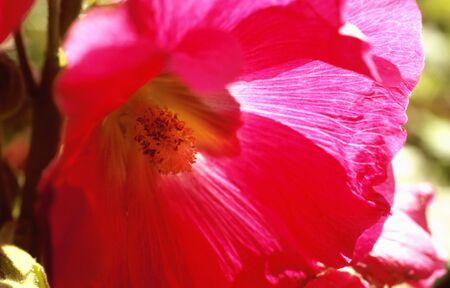 Summer flowers in cottage garden photo
