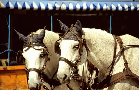 headcollar: horse-drawn carriage at Palace of Herrenchiemsee in  Bavaria, Germany