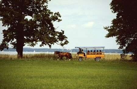 headcollar: horse-drawn carriage