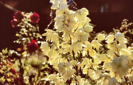 Glowing flowers in a garden  photo