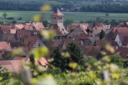 winegrowing: Village with vineyards in Dambach-la-Ville, Alsace, France