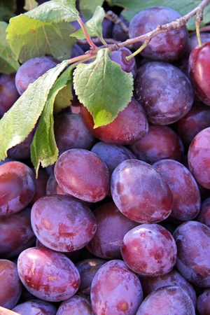 harvests: Close-up of plums in a basket with green leaves