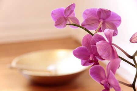 singing bowl: Pink Orchid and golden singing bowl as a decoration in yoga room