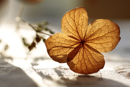 Autumn decoration with dried plant Stock Photo