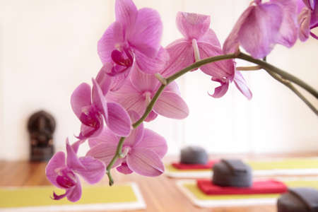 yoga pillows: Yoga pillows and pink orchid decoration in a yoga room
