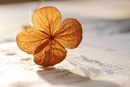 clover: Autumn decoration with dried plants in a vase