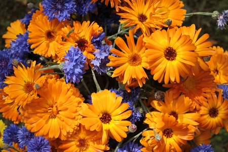 garden marigold: Close up of a colorful bouquet of flowers
