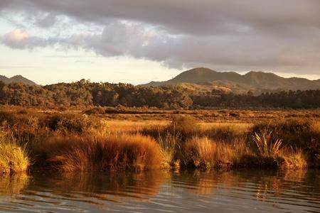 estuary: Untouched coast on the Coromandel Peninsula, New Zealand Stock Photo