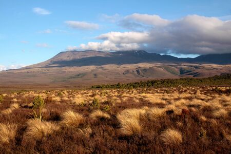 Landscape in the Tongariro National Park, Manawatu-Wanganui, New Zealand Stock Photo - 10415631