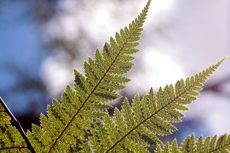 Green fern, near Rotorua, North Island, New Zealand Stock Photo - 10730516