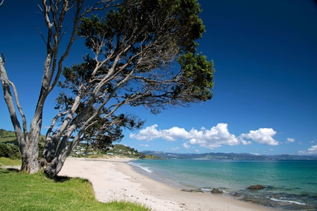 Coast line at Kuaotunu Bay,  Coromandel Peninsula, New Zealand