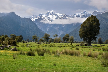westland: Looking to  Mount Cook from Fox village, Westland National Park,  South island,  New Zealand Stock Photo