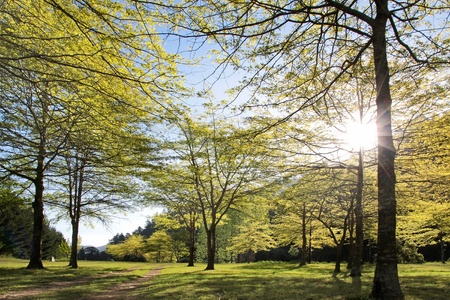 nelson: Forest in spring time near Nelson, South Island, New Zealand Stock Photo