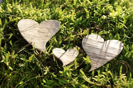 Heart out of bark on green moss