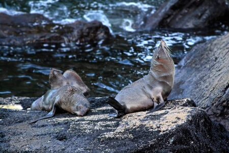 Seals in the Milford Sound, Southland, South island,  New Zealand photo