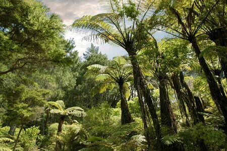 Tropical forest near Hahei, Coromandel Peninsula, New Zealand photo