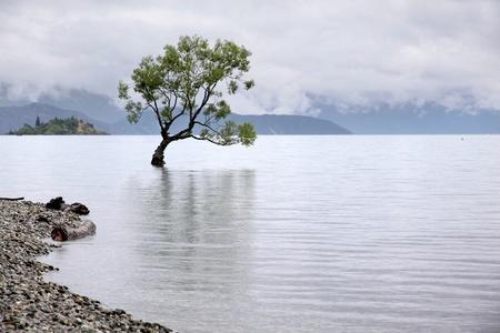 Tree in the Lake Wanaka, Otago, South island,  New Zealand photo