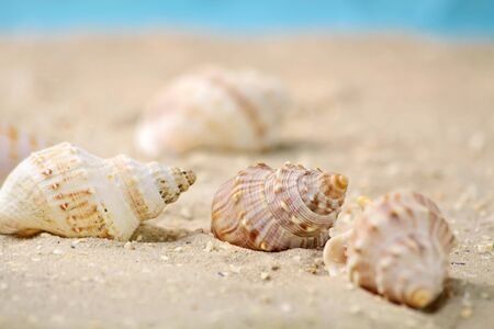 Close-up of marine snails in the sand on the beach photo