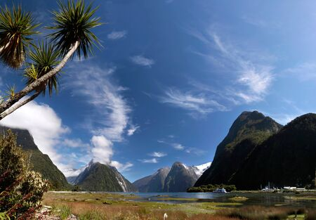 anau: Palm trees in the Milford Sound, Southland, South island,  New Zealand