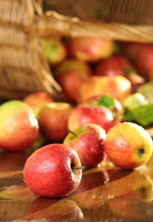 Basket of juicy apples on a wet table in the sun photo