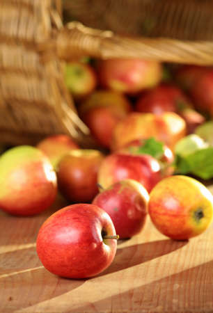 Basket of juicy apples in the sun photo
