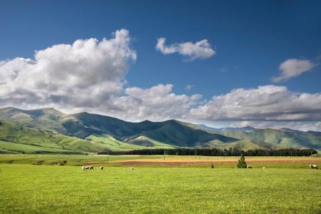 Green Farmland near Mossburn between Queenstown and Te Anau, Southland, South island,  New Zealand Stock Photo