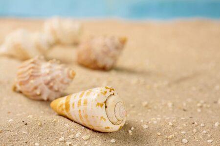Close-up von Meeresschnecken in den Sand am Strand