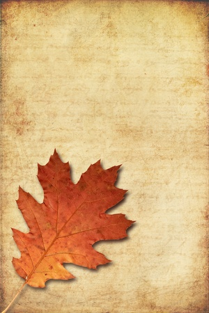 grunge background with red oak autumn leave  photo