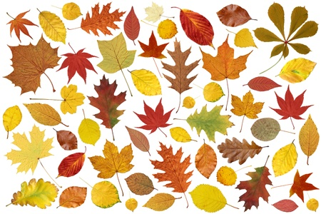 Background with variety of red and yellow autumn leaves  Stock Photo