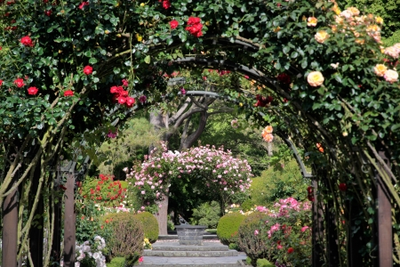 natural arch: Rose garden in the Botanic Gardens, Canterbury, South Island,  New Zealand Stock Photo