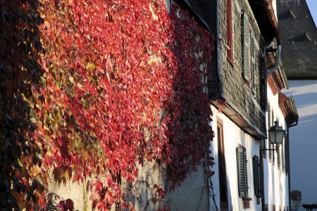Red vine leaves on a wall in Eltville, Rheingau, Hesse, Germany photo