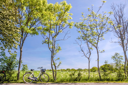 Spring trees with bicycle on Bornholm, Denmark photo