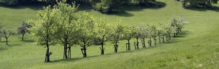 arbres fruitier: Nombre d'arbres fruitiers dans la montagne Taunus, Engenhahn, Hesse, Allemagne