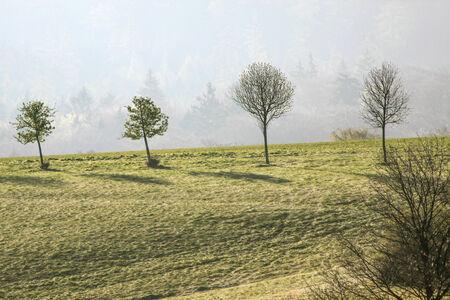 mild: Spring trees in the Taunus mountains near Engenhahn, Hesse, Germany