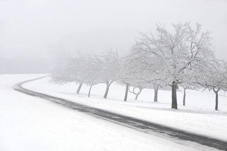 alberi da frutto: Alberi da frutto innevate con nebbia al Engenhahn nel Taunus, Assia, Germania