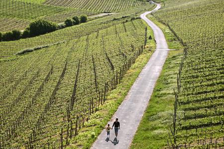 hesse: Vineyards at the Niederwald Monument near Ruedesheim in the Rheingau, Hesse, Germany Stock Photo
