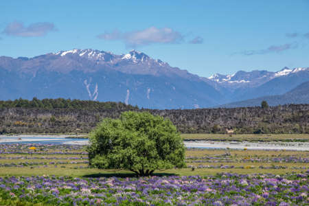 unaffected: Eglinton River Valley,  Southland, South island,  New Zealand Stock Photo