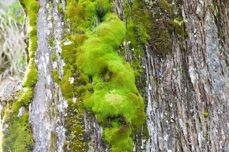 dosh: Various green mosses and lichens on rock in mountains