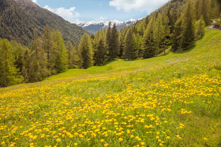 alp: Flower meadow in Campo Tures, South Tyrol, Italy Stock Photo