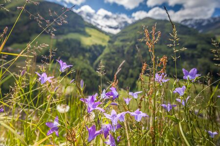 tyrol: Flower meadow in Campo Tures, South Tyrol, Italy Stock Photo
