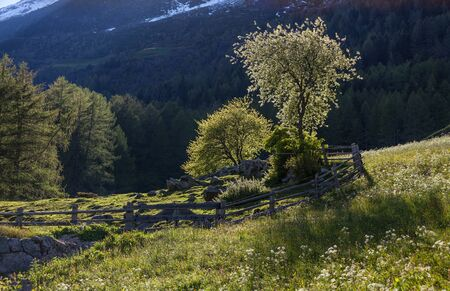 flourishing: Flower meadow and flourishing trees in South Tyrol, Italy Stock Photo