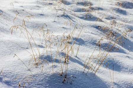Snowy meadows and dry grasses on the Klausberg, Valle Aurina, South Tyrol, Italy