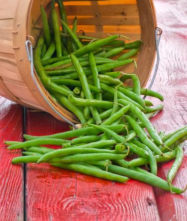greenbeans: fresh picked green beans Stock Photo