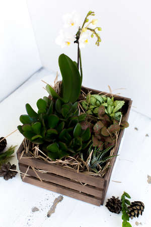 floor plant: Watercolor succulents in a wooden box Stock Photo