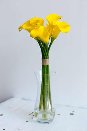calas blancas: Manojo de calas amarillas en el florero sobre fondo blanco Foto de archivo