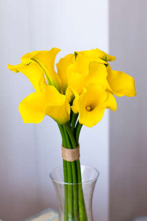 funeral: Bunch of yellow callas in the vase on white background