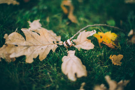 signify: Wedding rings on the autumn
