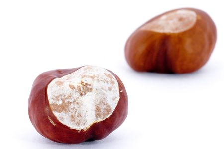 Closeup of two chestnuts isolated on white background photo