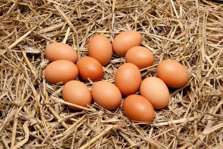brown organic eggs on straw photo