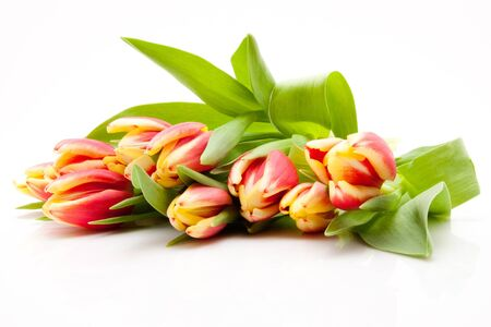 red and yellow tulips on white background Stock Photo